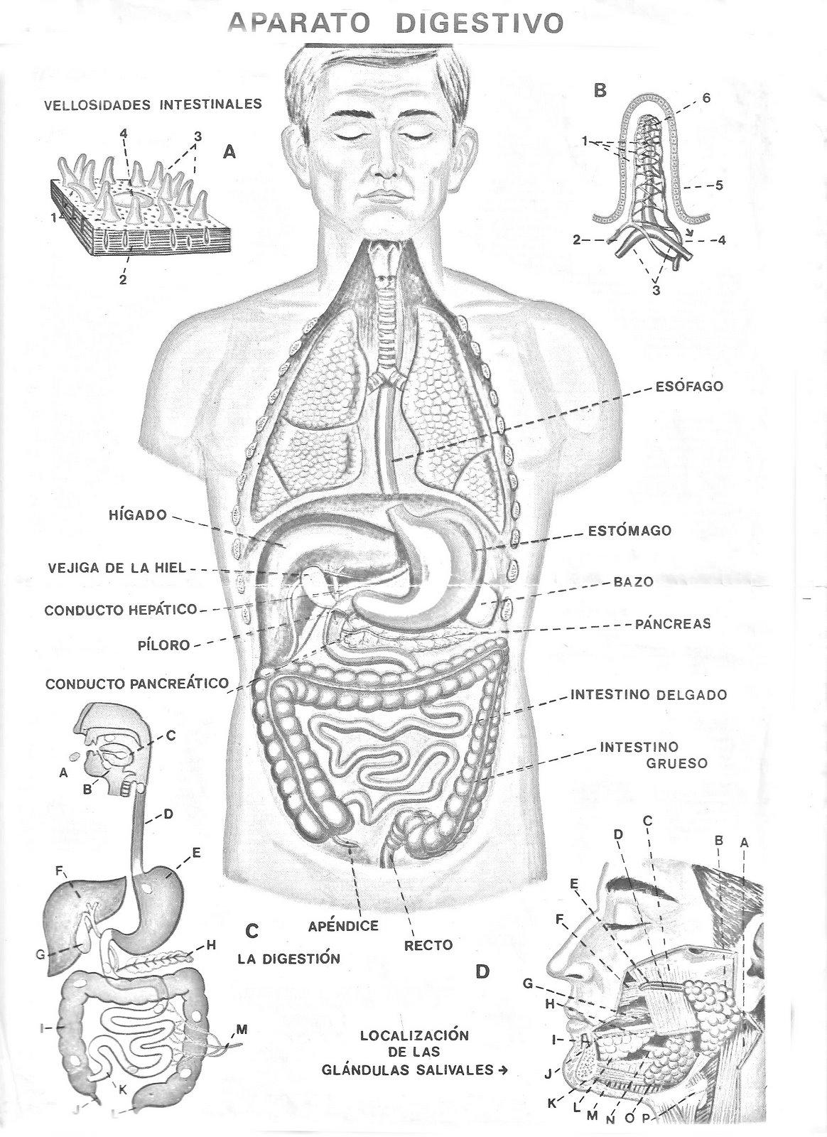 Los Alimentos - Monografias.com