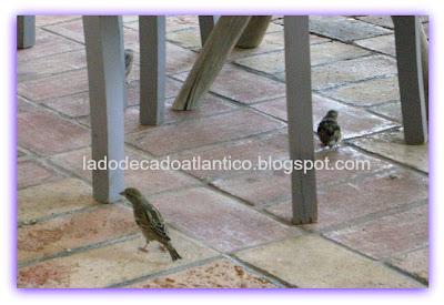 Pássaros no restaurante da praia d Meio, em Lagos - Algarve, Portugal.