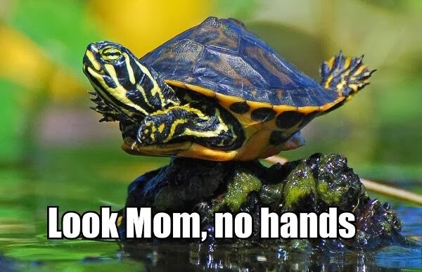 30 Funny animal captions - part 19 (30 pics), turtle caption pic, look mom no hands
