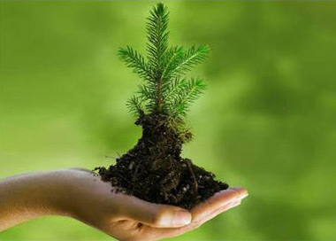 essay environmental protection in india Environmental protection essays - instead of concerning about essay writing get the needed assistance here let professionals accomplish their work: receive the.