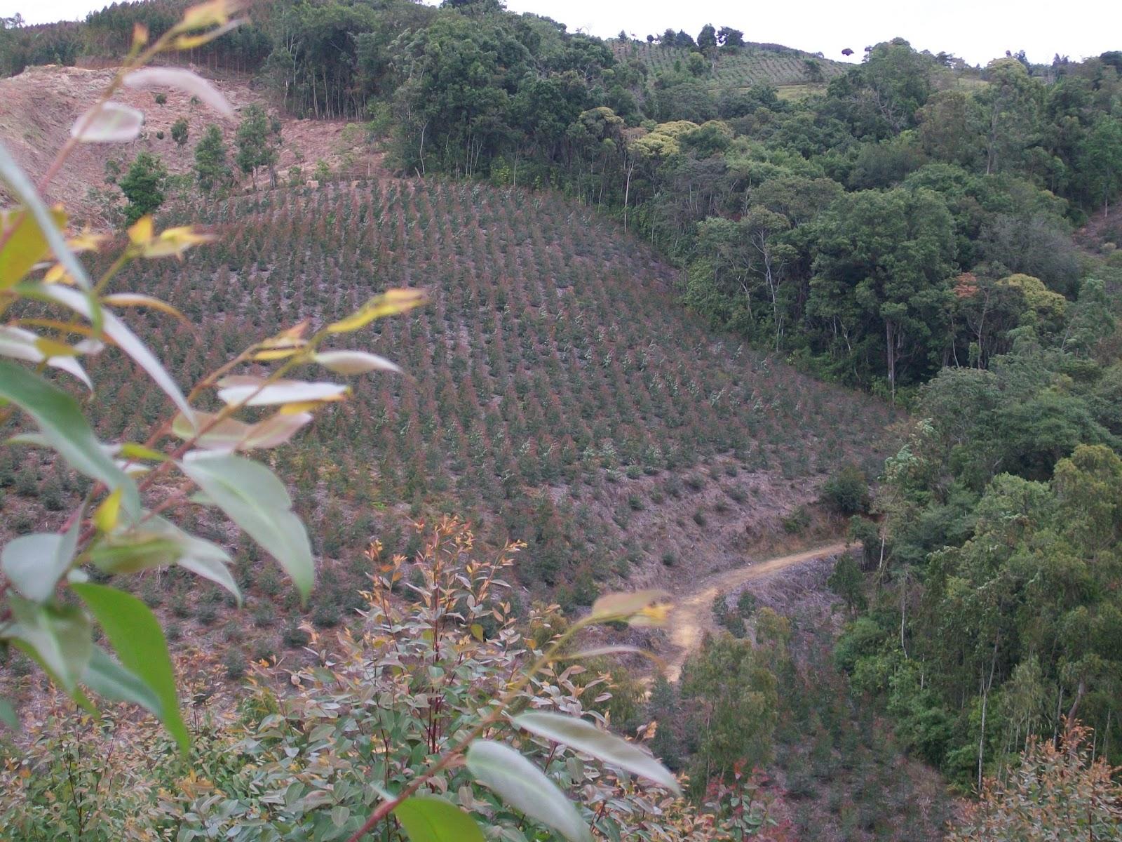 Cooperativa agroforestal del cauca vivero forestal cootraforc for Viveros forestales en colombia
