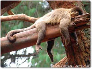 A Monkey Is Sleeping, Let's Don't Disturb