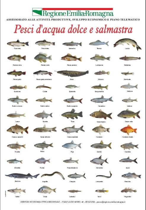 Il bilancionato pesci d 39 acqua dolce e salmastra for Pesci acqua dolce