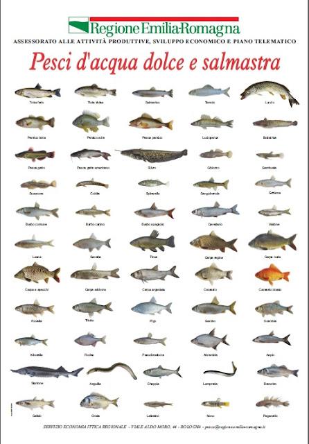 Il bilancionato pesci d 39 acqua dolce e salmastra - Pesci comuni in tavola ...