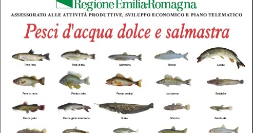 Il bilancionato pesci d 39 acqua dolce e salmastra for Pesci acqua dolce commestibili