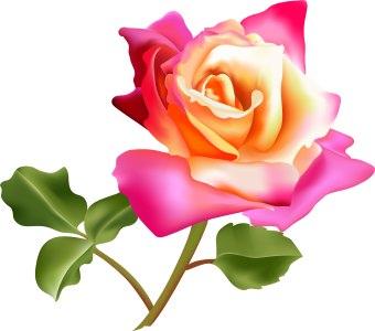 flowers flower lovers