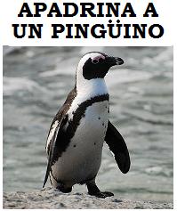 Sponsor a Penguin