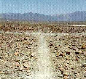 gambar nazca