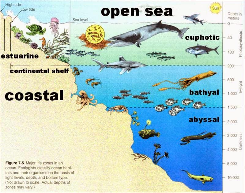 ACDS Earth Science: Ocean Life Zones