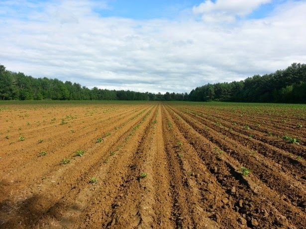 http://www.publicdomainpictures.net/view-image.php?image=43173&picture=agricultural-fields
