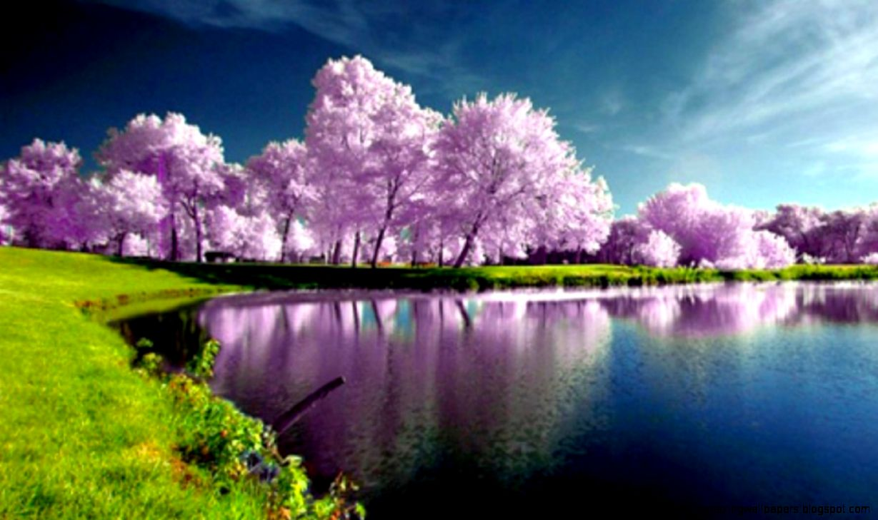 Wallpaper Spring Nature Scenes   WallpaperSafari