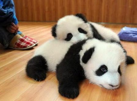Cute Baby Animals Pictures Funny Images Wallpapers Photos