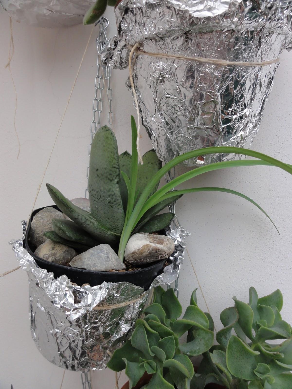 Aria di montagna piante grasse nel balcone - Vasi con piante grasse ...