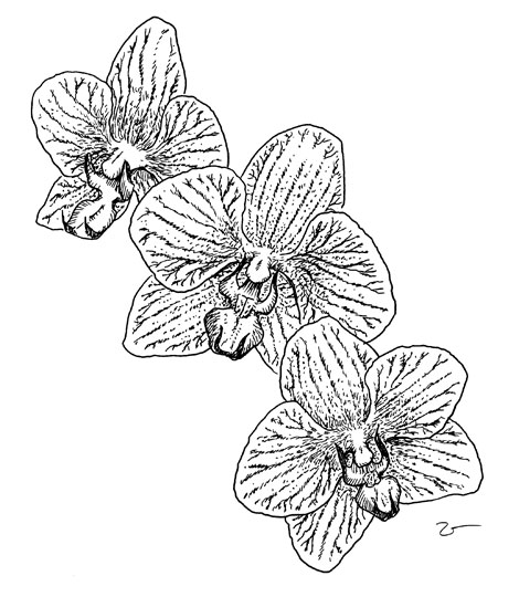 Coloring Pages For Kids Orchid Flower Coloring Page Orchid Coloring Pages