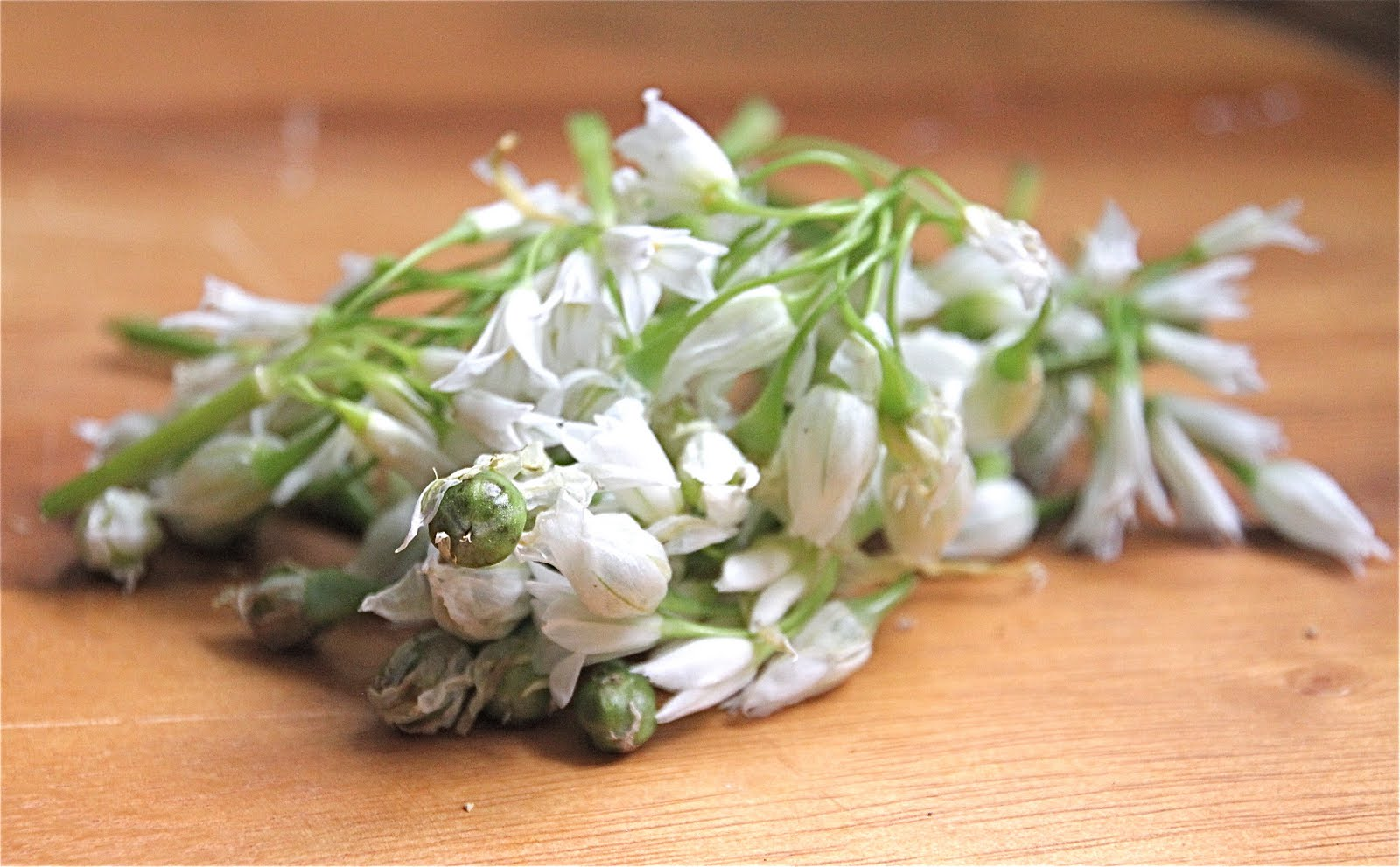 Arugula Flowers Are Edible And Make A Beautiful Garnish For Salad