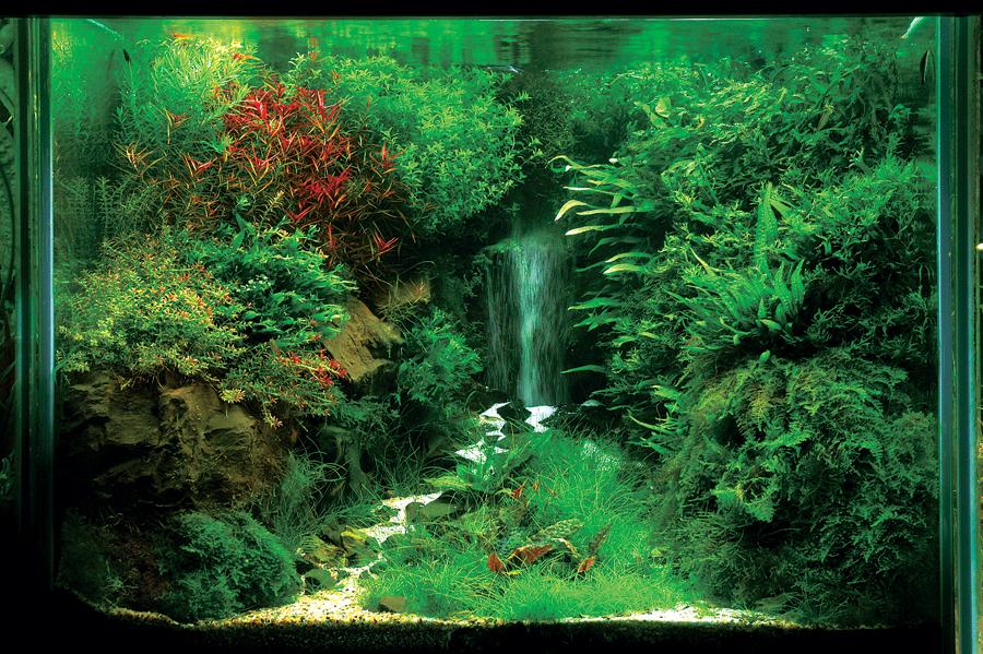 Akuarium unik membuat air terjun di aquascape - Gambar aquascape ...