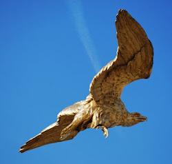 Der goldene Adler