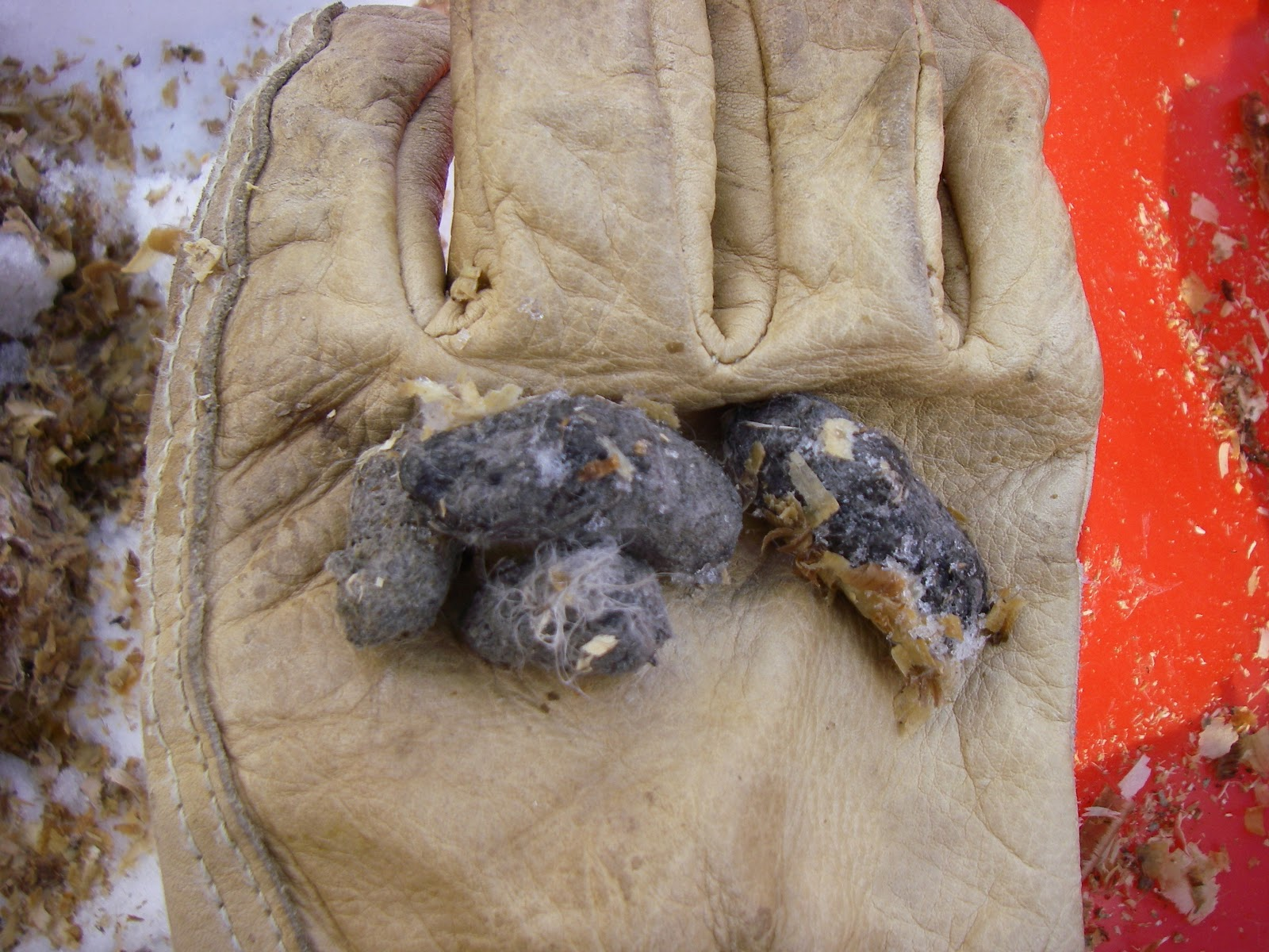 how to find owl pellets in the wild