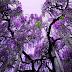 Taman Bunga Paling Indah Di Jepun