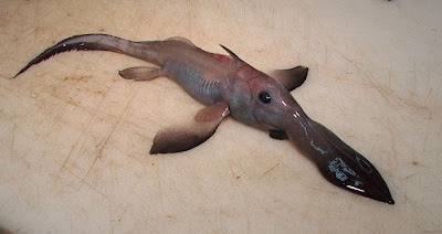 Extrañas criaturas marinas despues del Tsunami en Japón - 2011