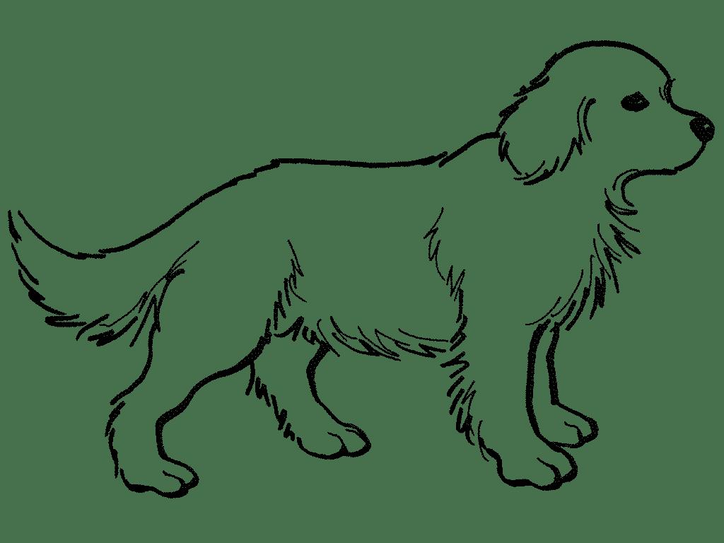 Animales Terrestres Para Colorear Pintar imágenes Part 9 - imagenes de animales terrestres para colorear