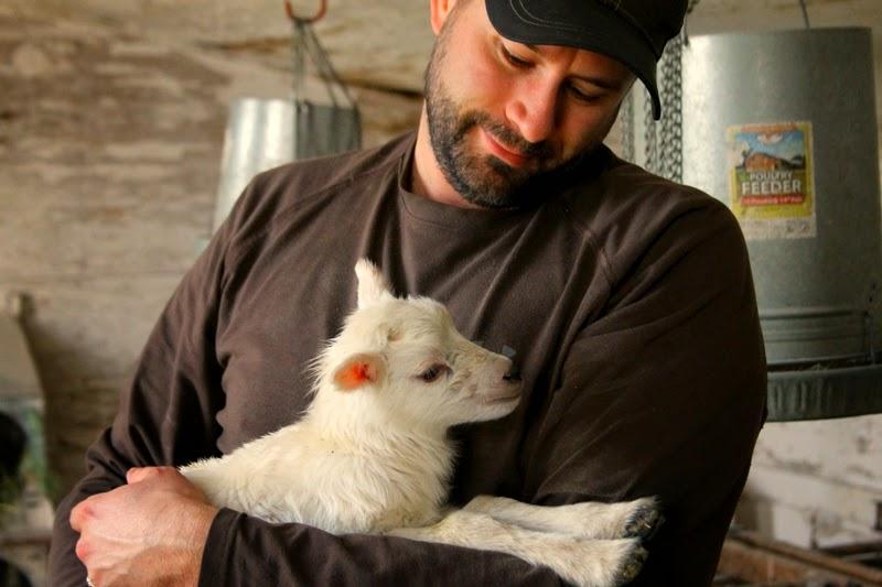 Papa Bear with Finn's male lamb