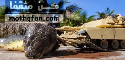 مثقفا: حقيقه الثعبان الضخم الذى انتشرت صوره على الانترنت ...