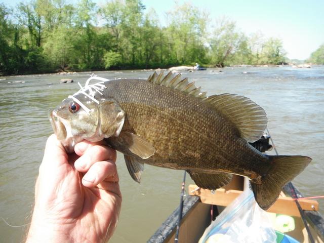 North carolina river fishing and canoeing with mack for Catawba river fishing
