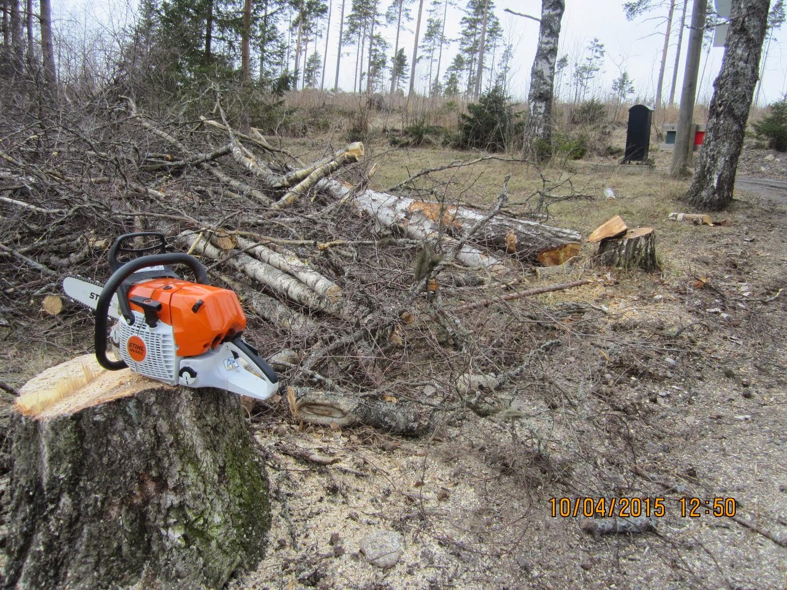 Isotkin puut kaatuvat joko suoraan kauttani tai yhteistyössä nostolavan kanssa