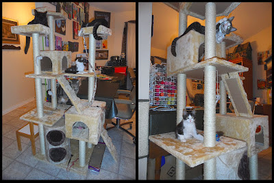 Anakin, Trixie, Pixie & George's New Kitty Condo!