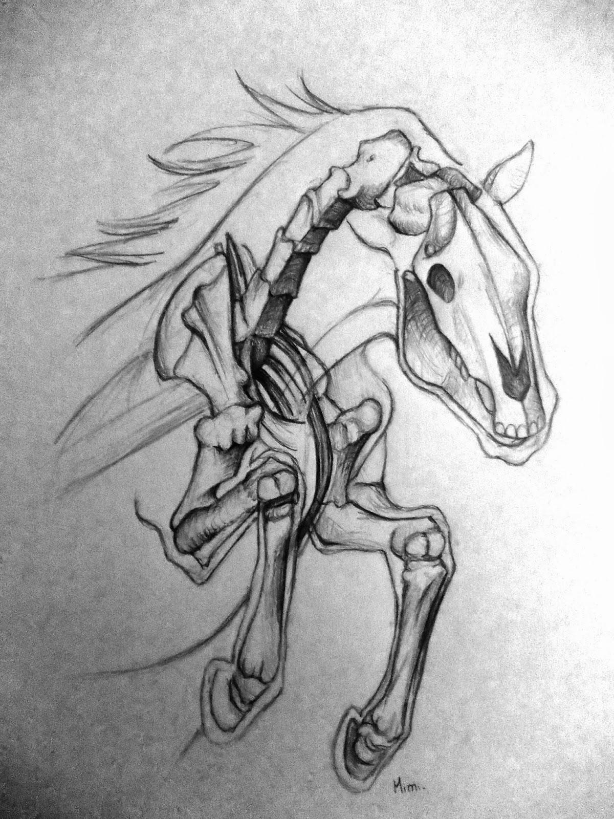 Mimidraw squelette de cheval - Dessin de squelette ...