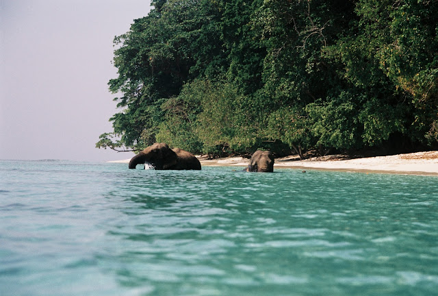 Elephants, Andaman Islands