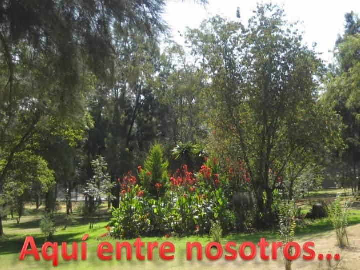 AQUÍ ENTRE NOSOTROS