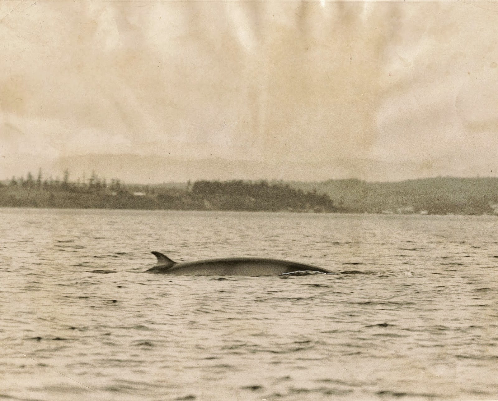 Saltwater people log september 2013 whale off whidbey island geenschuldenfo Image collections
