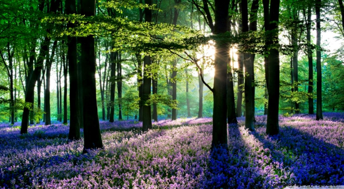 Forest Flowers Wallpapers