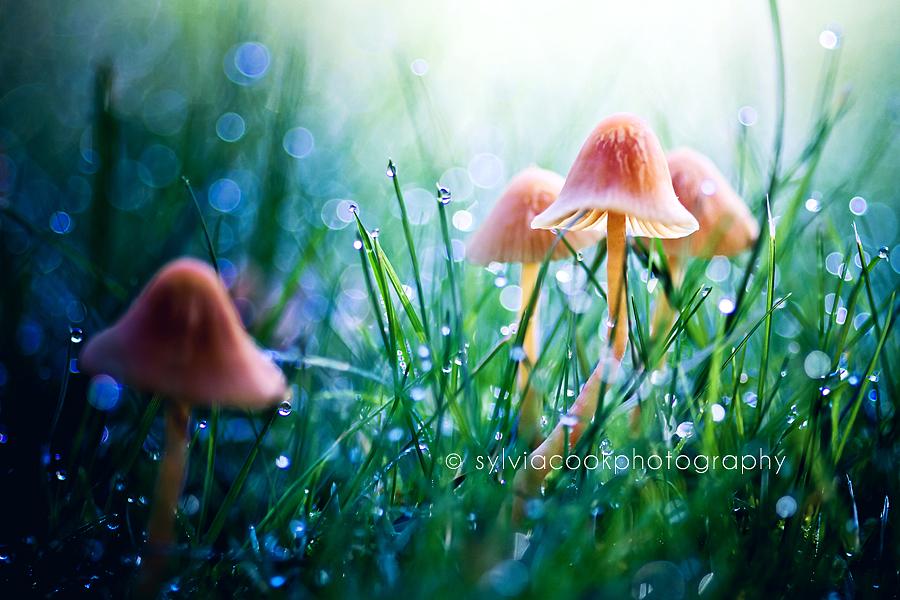 macro of mushrooms and raindrops