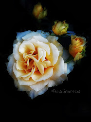 Roses in Hope