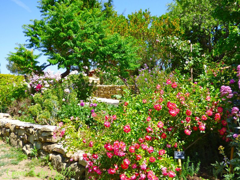green zen bubbles le jardin des roses. Black Bedroom Furniture Sets. Home Design Ideas