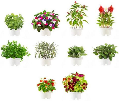 click & grow plants