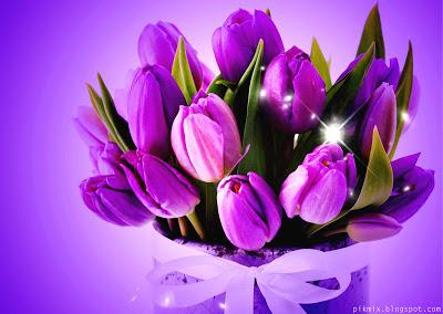 Bouquet de tulipanes violeta