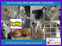AGUIPROAN (MARITA ANIMALES EN ADOPCION)