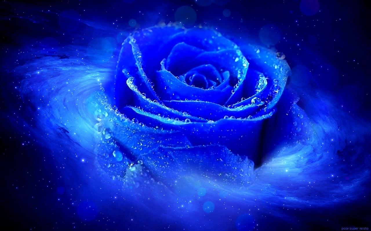http://3.bp.blogspot.com/-gPy_FwjdPnU/Tq_B10NP5iI/AAAAAAAAEdo/Cb5Dar3A9BY/s1600/trandafiri_albastru_roua.jpg