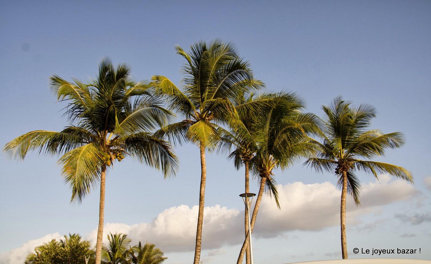 Guadeloupe - Trois Rivières - palmiers