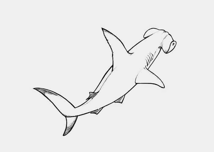Hammerhead Shark Coloring Pages to Print Laura Williams