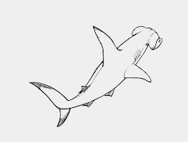Hammerhead Shark Coloring Pages Free