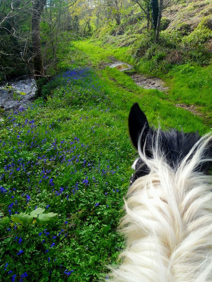 Bluebell Trail