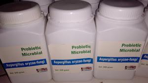 Aspergillus oryzae