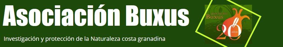 Asociación Buxus