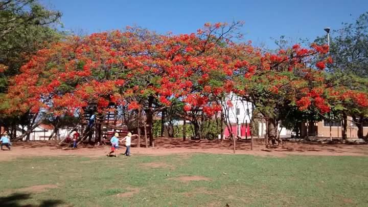 Parque da nossa escola