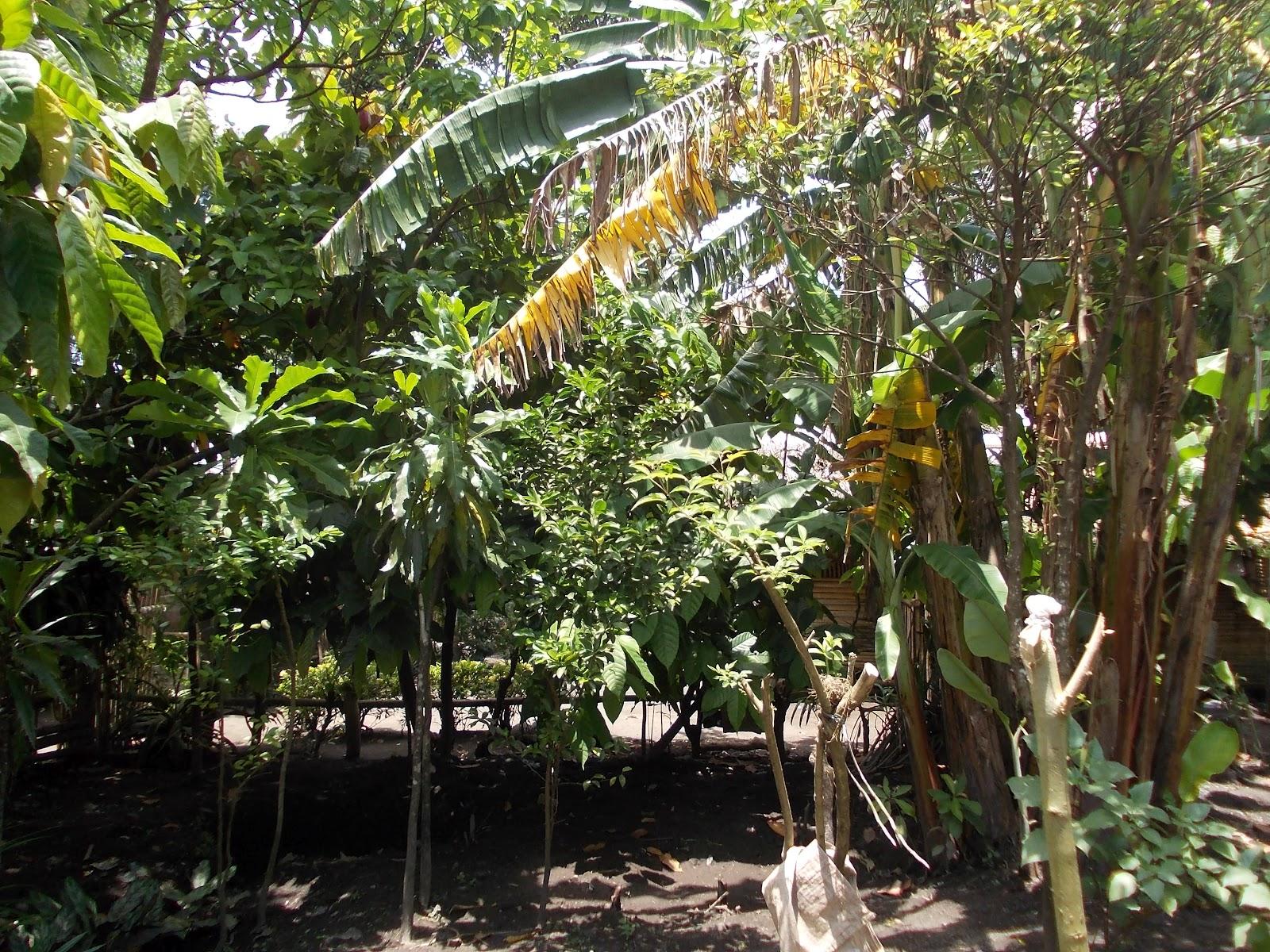ang niyog nga Makatuklas ng mga bagong sabstans o elemento at lalo pang makilala ang kalikasan ng mga  ang niyog na tinatawag na tree  hindi na nga kailangan ang overhead.